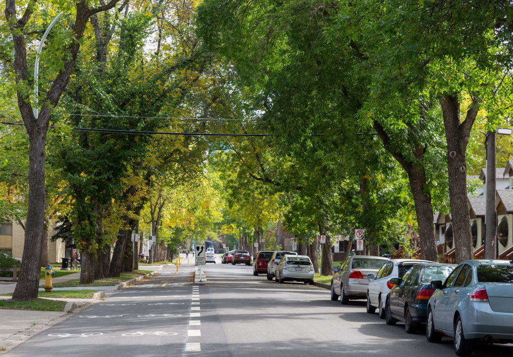 The proposed Public Tree Bylaw would help protect boulevard trees such as these ones along 102 Avenue in Oliver. (Mack Male/Flickr)